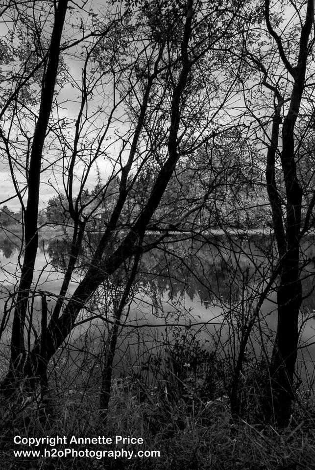 Bramshill Lake -15