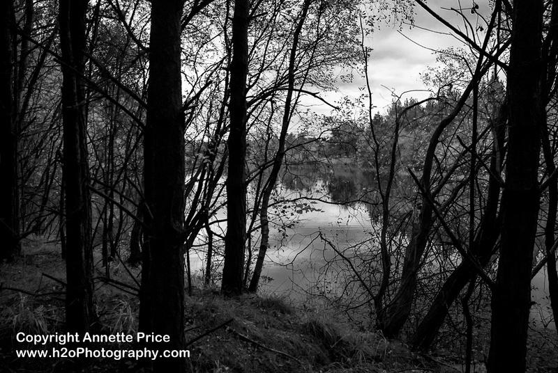 Bramshill Lake -11