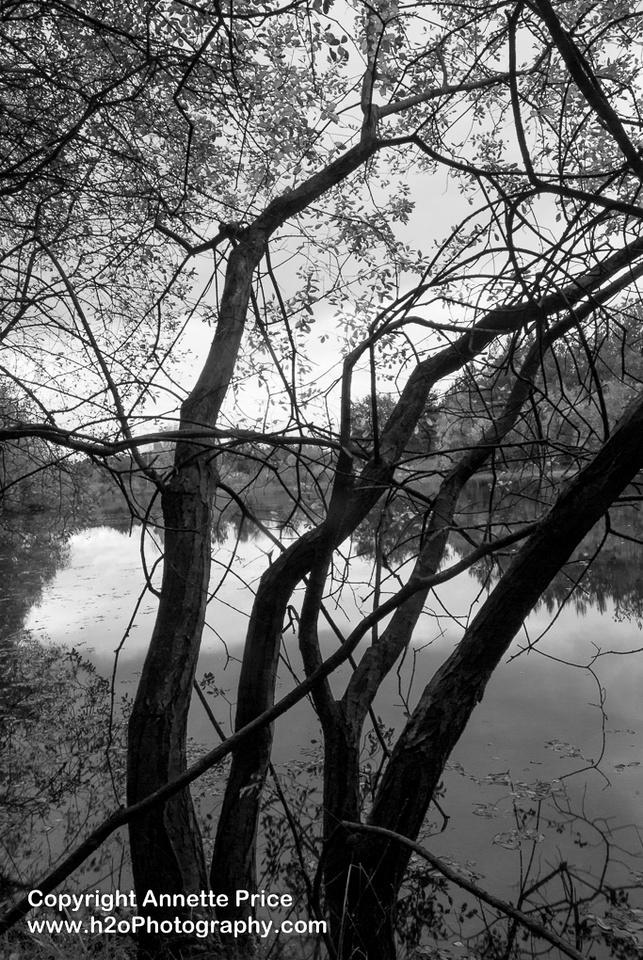 Bramshill Lake -22