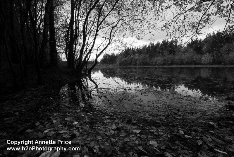 Bramshill Lake -26