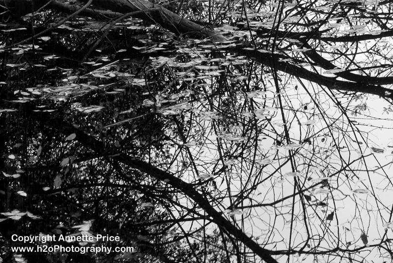Bramshill Lake -28