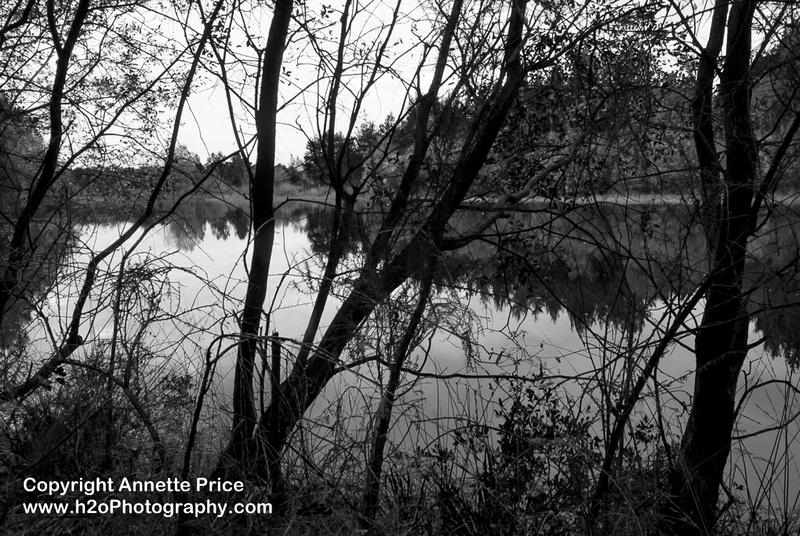 Bramshill Lake -13