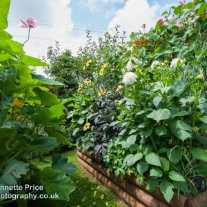 Neils garden July -54