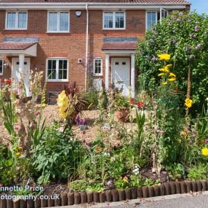 Neils garden July -148
