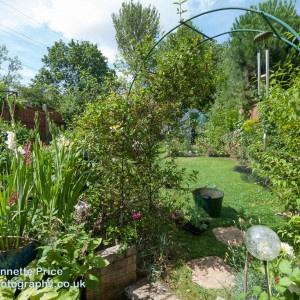 Neils garden July -170