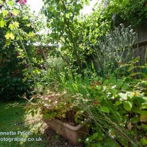 Neils garden July -190