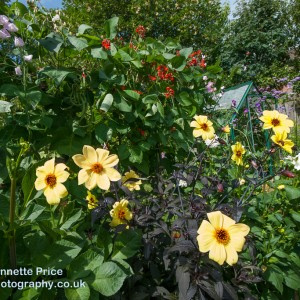 Neils garden July -200