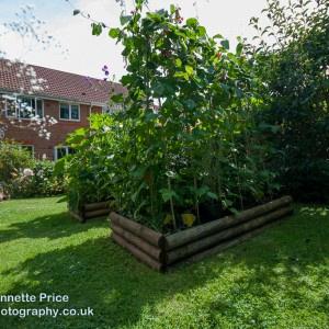 Neils garden July -225