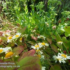 Neils garden July -226