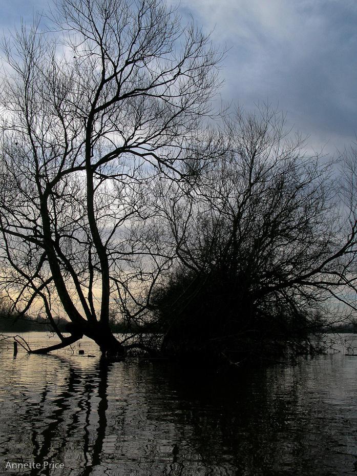 Worcester floods Jan 2013-174