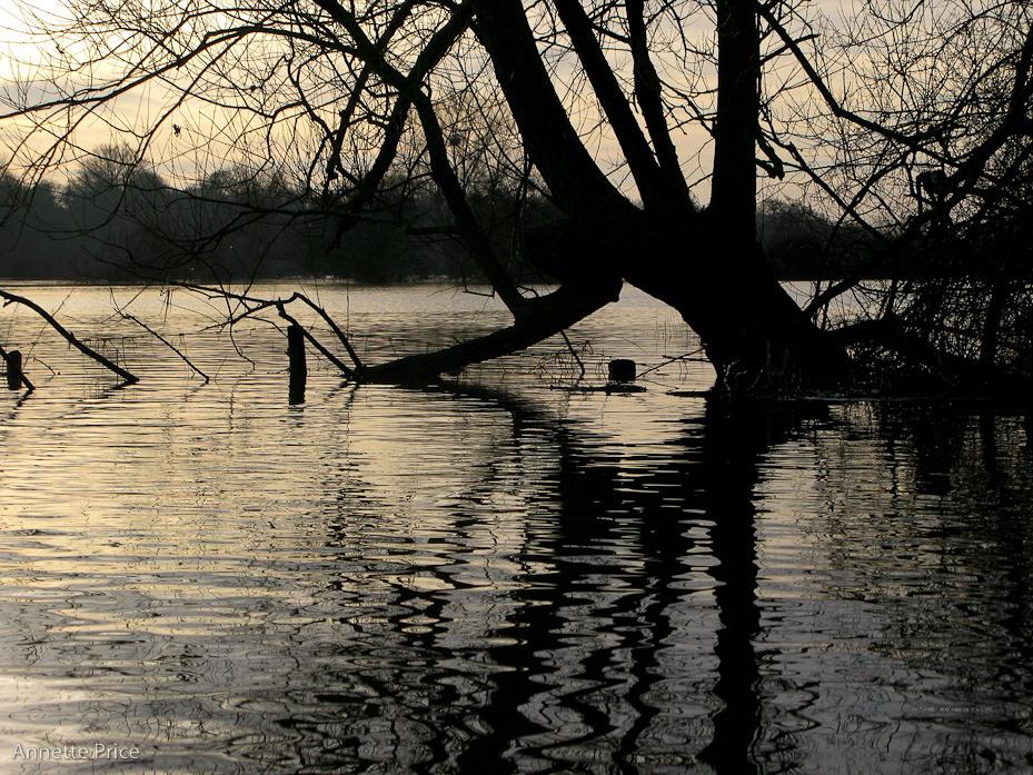 Worcester floods Jan 2013-176