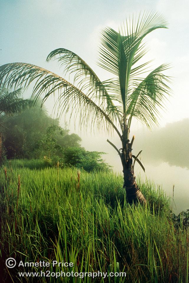 Ituni, Berbice River, Guyana, South Ameica
