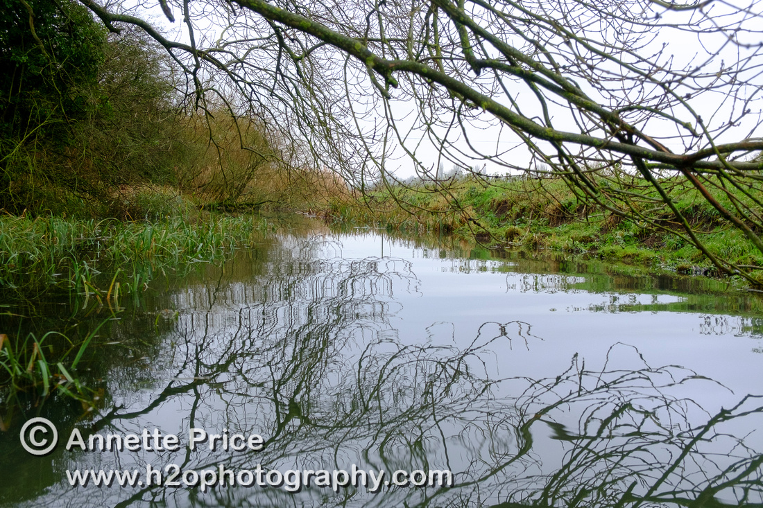 Tributary immediately up-river from Lechlade.