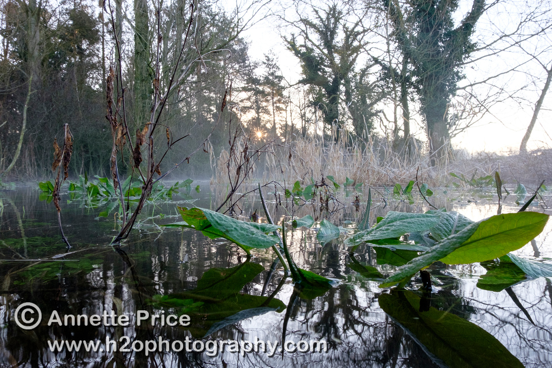 Dawn at Lyd Well. Water is currently emerging from underground forming the start of the River Thames