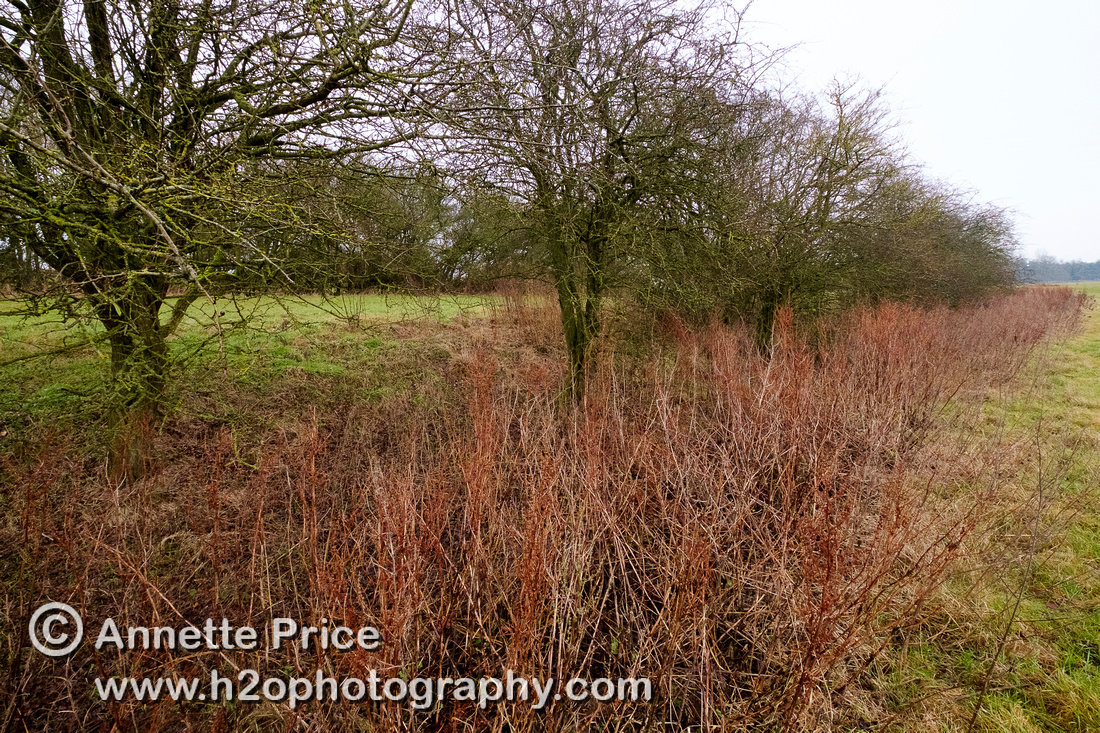 Dry river bed, near the Source of the River Thames, Kemble.