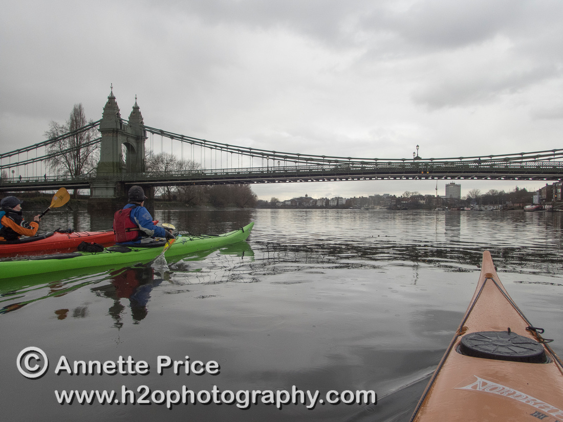 Kayaking on the River Thames,  approaching Hammersmith Bridge. London