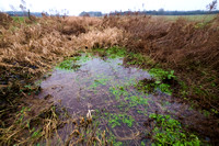 First water visible in the River Thames,  January 2017. 1 mile from the Source at Kemble.