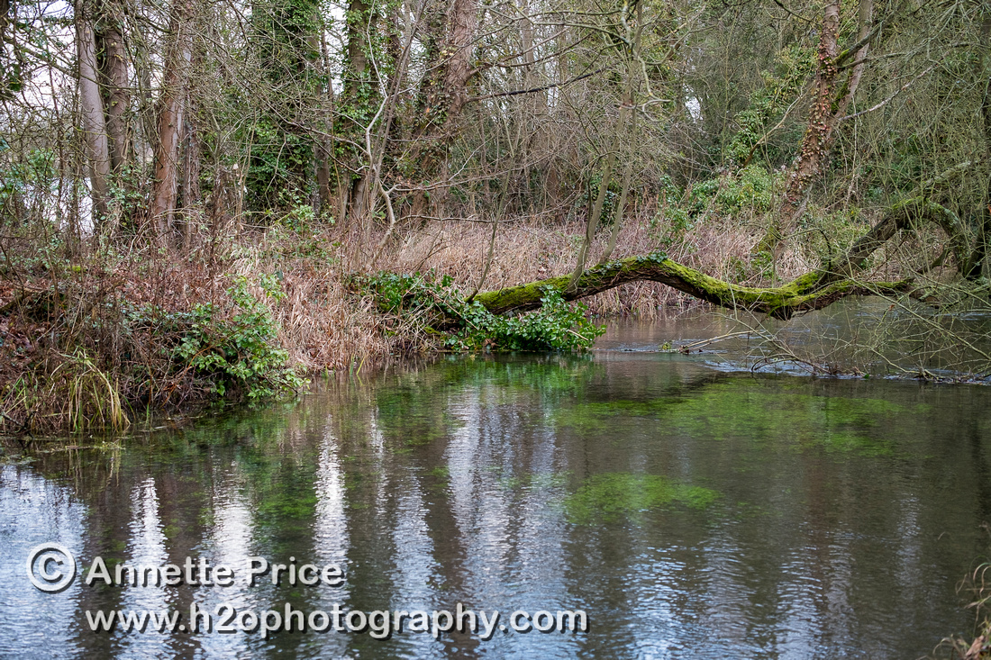 River Thames, up river from Ashton Keynes village, UK