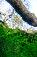 Looking up from underwater through 'Snell's Window' River Thames near Kemble.